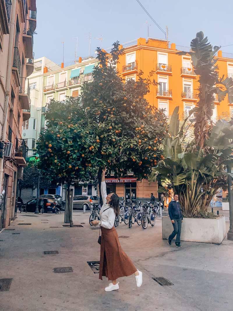 De sinaasappelbomen horen bij Bebsy in Spanje de Valencia tips