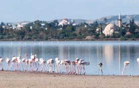 Het Larnaca zoutmeer