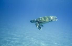Schildpadden spotten