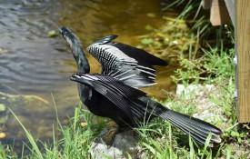 National Park Everglades