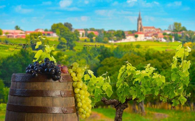 Bordeaux - Wijnveld