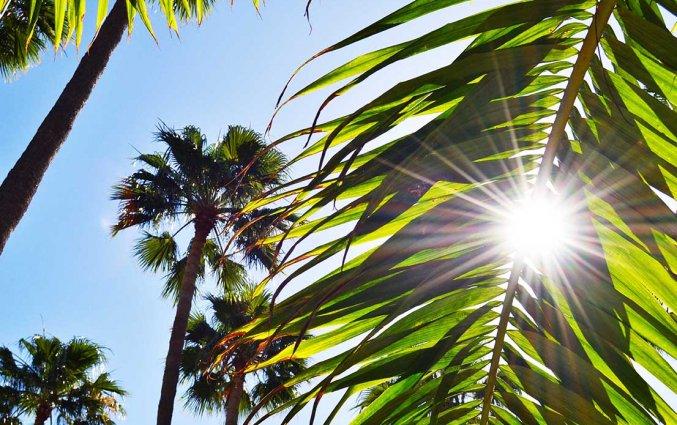 Tuin van Appartementen Playa del Sol op Gran Canaria